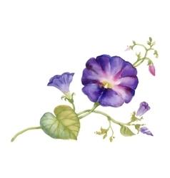 Watercolor summer garden blooming bind weed buds vector