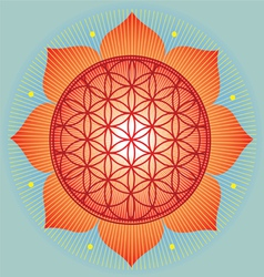 Sacred geometry flower of life orange mandala vector