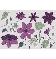 Set of hand drawn beautiful clematis flowers vector image vector image