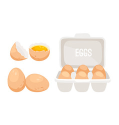 Fresh chicken eggs vector