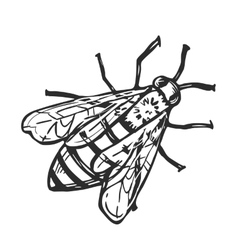Honey bee isolated freehand pencil drawing vector