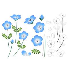 Nemophila baby blue eyes flower outline vector