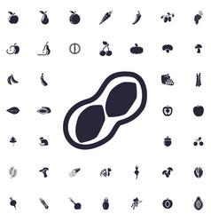 Peanut icon vector