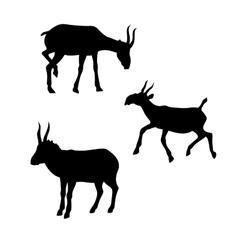 Saiga silhouettes vector image