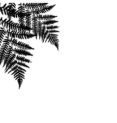 fern leaf silhouette background on white vector image