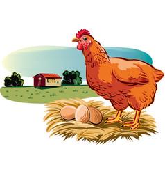 Hen with eggs vector