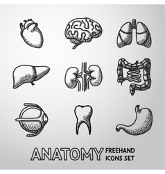 Internal human organs handdrawn icons set with vector