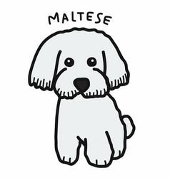 Maltese dog cartoon doodle style vector