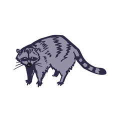 Racoon character isolated vector