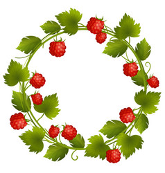 round wreath with raspberry and leaves vector image