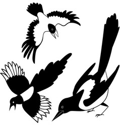 The black silhouette of a crow raven rook vector