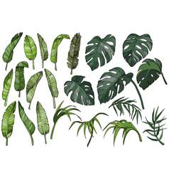Tropical palm leaves set jungle plants vector