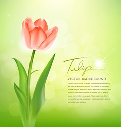 Beautiful tulips on nature vector image vector image