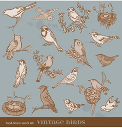 Hand drawn set birds vector image