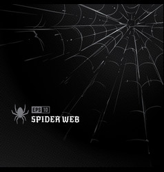 Spider web on black vector