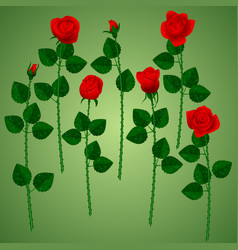 Set of red roses on green background vector