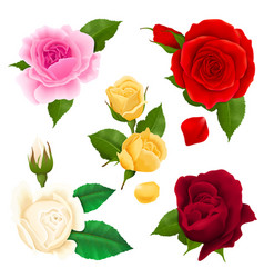 rose realistic set vector image