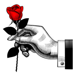 vintage engraving drawing of hand with a red rose vector image vector image