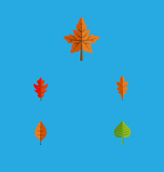 Flat icon leaves set of hickory foliage linden vector