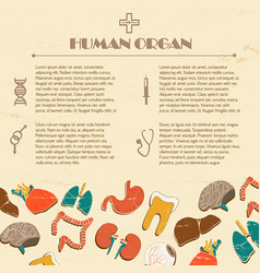 human organs background vector image