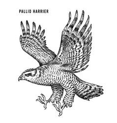 Pallid harrier wild forest bird prey hand vector