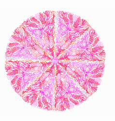 pink abstract floral mandala vector image