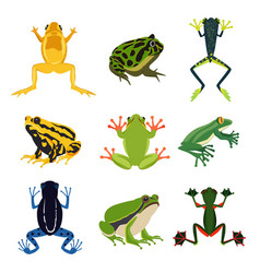 exotic amphibian set different frogs in cartoon vector image vector image