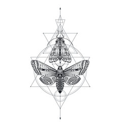 black and white moths over vector image
