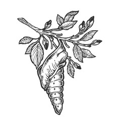 butterfly cocoon on tree sketch engraving vector image