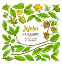 jojoba elements set on white background vector image