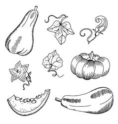 Pumpkins Doodles Hand-Drawn vector