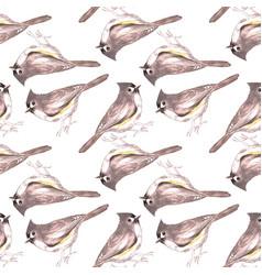 Tufted titmouse or baeolophus bicolor bird vector