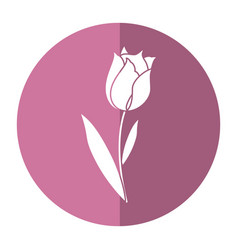 Beauty tulip flora nature shadow vector