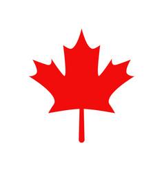 Canada leaf icon vector