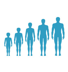 Mans body proportions aging vector