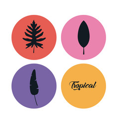 set of summer and trendy tropical leaves vector image