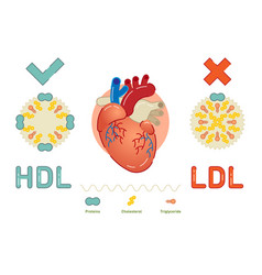 what is lipoprotein - explanation vector image