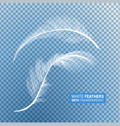 White fluffy feathers realistic transparent effect vector