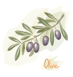 olives watercolor style vector image vector image