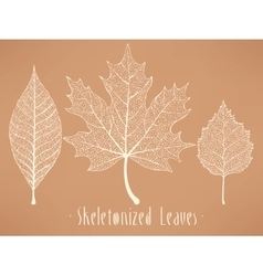 Skeletonized leaves collection vector