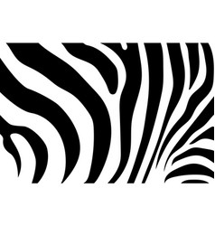abstract background skin a zebra white vector image