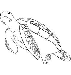 Contour sea turtle isolated vector