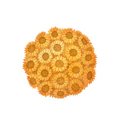 sunflower ball watercolor isolated on white vector image
