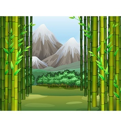 Bamboo jungle with mountains background vector image
