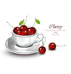 cherry fruits in a cup realistic fruits vector image
