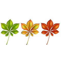 Leafy plants vector
