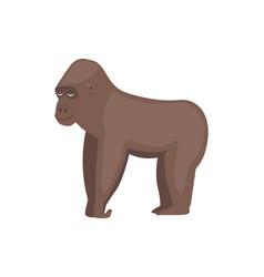 gorilla african animal vector image vector image