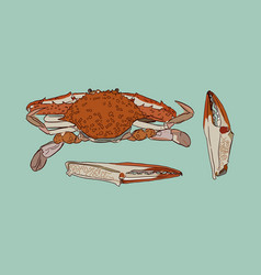 vintage crab drawing vector image