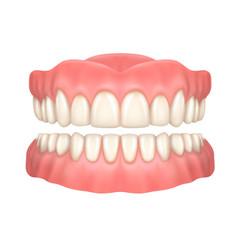 Realistic dentures or false teeth dentistry vector