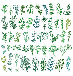 set doodles flowers branches leaves herbs vector image